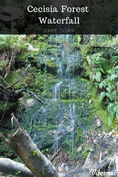 This hike is close to Cape Town and the waterfall in question is on the backend of Table Mountain. You hike up through Cecilia Forest – one of Cape Town's many plantations, to access it Hiking Spots, Hiking Trails, Forest Waterfall, Table Mountain, Cape Town, South Africa, World, Awesome, The World