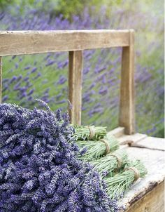 Lavendar stacked on a bench
