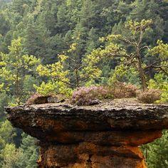 Kudy z nudy - Kokořínské pokličky - Mšenské skalní útvary na Kokořínsku Outdoor Decor, Plants, Painting, Rocks, Stones, Painting Art, Paintings, Stone, Planters