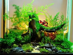 in and out planted aquarium