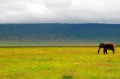 African Safari: Tanzania's Ngorongoro Crater https://www.gadventures.com/blog/african-safari-tanzanias-ngorongoro-crater/#.VqED499shfE.twitter #travel #safari #africa #tanzania #ngorongoro
