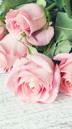 48 ideas wall paper rose beach for 2019 Love Rose, My Flower, Pretty Flowers, Flower Power, Pink Flowers, Nature Iphone Wallpaper, Flower Wallpaper, Wallpaper Ideas, Romantic Roses
