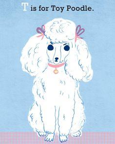 Toy Poodle illustration by Katie Turner