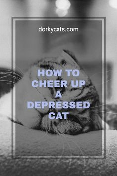 How to cheer up a depressed cat? If your cat is sad or depressed, is there anything that can be done? Unfortunately, a cat can become sad and depressed at times. If that happens, you want to be prepared.To cheer up a depressed cat, it is necessary to remove any cause of stress, enrich the environment with toys and cat trees, institute playtime, consider a second cat, visit the vet to rule out health problems. Finally, spend more time with your cat. Do not leave him alone too much. Stress Factors, Stress Causes, Interactive Cat Toys, Kitten Toys, Cat Trees, Cat Care Tips, Cat Behavior, Feeling Sad, Love Pet