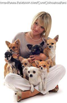 Pack of #chihuahuas #image via www.Facebook.com/CuteChihuahuaFans