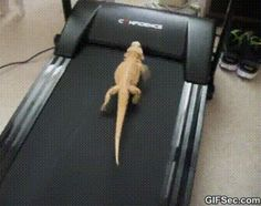 Have a Bearded Dragon that's fat and lazy.....here's a great way to get him/her moving