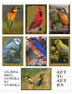 These #BIRDS have all flocked together for you to separate. COLORFUL 108 Digital Image Collage for crafts by ArtToArt