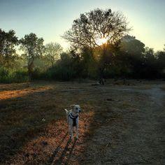 Sunrise walkies