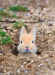 Ahhhhh Adorable cute bunny