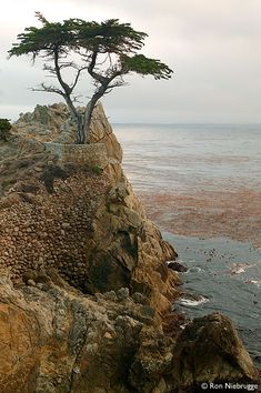 Lone Cypress, 17 Mile Drive, Monterey Peninsula My favorite. The lone tree looks like it is waiting for someone. California Dreamin', Monterey California, Monterey Peninsula, Carmel By The Sea, Exploration, Beautiful Places To Visit, Places Around The World, Vacation Destinations, Lone Tree