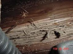 Termite Damage http://www.skylinepest.com/ http://www.arrowservices.com/
