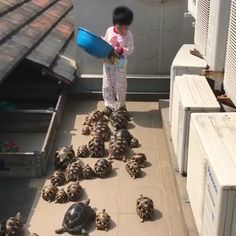 This adorable little boy is a tortoise whisperer Funny Animal Videos, Cute Funny Animals, Funny Animal Pictures, Animal Memes, Cute Baby Animals, Animals And Pets, Pet Videos, Wild Animals, Cute Creatures