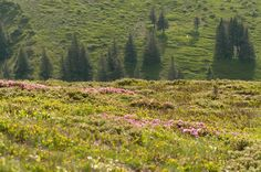 Spring in the Ciucas Mountains by Fabi Nuka on 500px Explore, Mountains, Spring, Nature, Travel, Naturaleza, Viajes, Destinations, Traveling