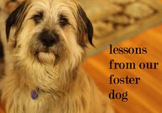 lessons learned from fostering a rescue dog