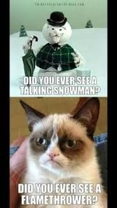 funny quotes about frowning cat - Google Search