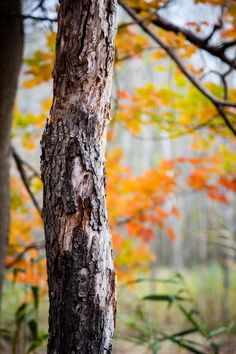 Taka Clip — autumncamera: edge of the meadow Blur Image Background, Blur Background In Photoshop, Desktop Background Pictures, Blur Background Photography, Studio Background Images, Background Images For Editing, Light Background Images, Picsart Background, All Nature