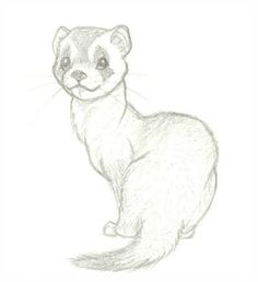Drawn ferret cartoon - pin to your gallery. Explore what was found for the drawn ferret cartoon Cute Animal Drawings, Animal Sketches, Art Drawings Sketches, Cartoon Drawings, Easy Drawings, Cute Ferrets, Love Art, Art Reference, Cute Animals