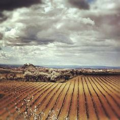 #Vineyards near San Vicente de la Sonsierra, #Rioja Alta, #Spain #wine #tours
