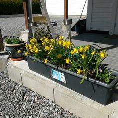 Starting my garden Thats Not My, Garden, Plants, Garten, Flora, Plant, Lawn And Garden, Outdoor, Tuin