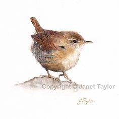 Wren: An original watercolour painting by Jan Taylor. by KeepersCottageArt on Etsy Watercolor Bird, Watercolour Painting, Watercolours, Bird Drawings, Horse Drawings, Sign Printing, Wildlife Art, Bird Art, Paisajes
