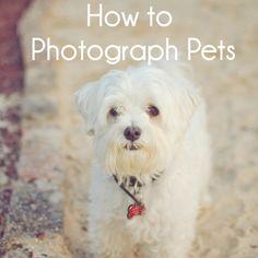 How to Photograph Pets.  I SO need this!  With my two senior girls, I want to make sure I have some great pics.