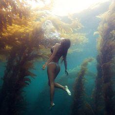 Freediving under the golden canopy of the kelp forest, Laguna Beach, California