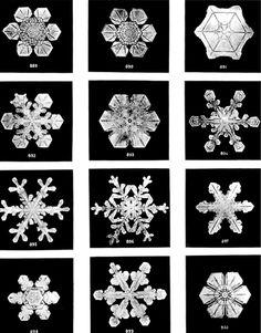 Biography: 19th Century photographer of Snowflakes – Wilson Bentley   MONOVISIONS Snowflake Images, Snowflake Shape, Snowflake Designs, Madara Uchiha, Best Microscope, Snowflake Bentley, Hilma Af Klint, Ice Crystals, Spirit World