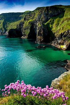 Sea pinks at Carrick-a-rede on the north coast of Northern Ireland.