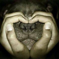 Pit bull love ❤