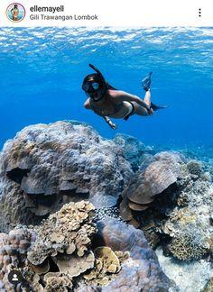 Lombok, Bird, Animals, Animales, Animaux, Birds, Animal, Animais