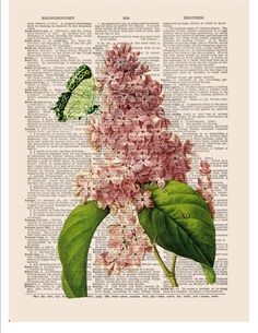 Items similar to Lilac wall art print on dictionary or music page Green butterfly Dictionary art print Wall decor Sheet music Digital Flower print No. 510 on Etsy Pictures Images, Vintage Pictures, Vintage Images, Music Pictures, Book Page Art, Book Art, Vintage Paper, Vintage Art, Vintage Sheets