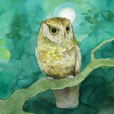 but of course. Owls.