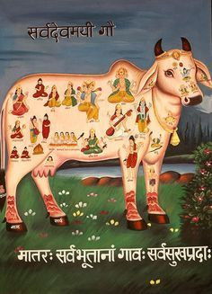 Kamadhenu, the sacred cow which grants all wishes and desires, is an integral part of Hindu mythology. This divine cow, which lives in swargalok (heaven), emerged from the ocean of milk (kshira-sagar) at the time of samudra-manthan (the great churning of the ocean by the gods (suras) and demons (asuras). It was presented to the seven sages by the Gods, and in course of time came into the possession of Sage Vasishta.