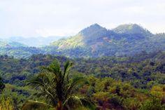 Blue Mountains #jamaica