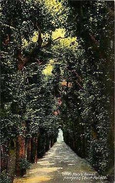 London England 1907 Queen Mary's Bower Hampton Court Antique Vintage Postcard
