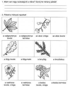 termések rajzok - Google keresés
