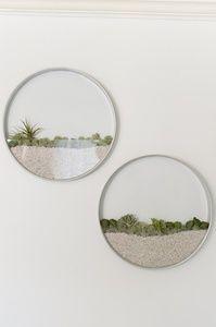 Succulent air plant wall planter的图片
