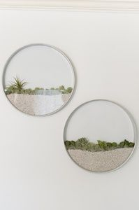 Succulent air plant wall planter的图片
