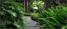 Honolulu Landscape Architect | Honolulu Landscape Design | Landscaping in Honolulu, river rock and paver path surrounded by ferns and philodenderons