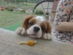 Cavalier   Give me early.