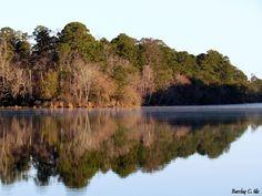 Lake Raven morning glass    Huntsville State Park, Huntsville Texas