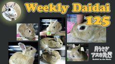 Weekly daidai 125