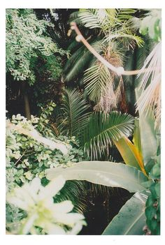 Tropical ★ iPhone wallpaper