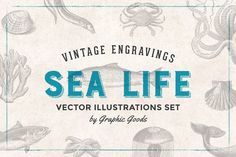 Ad: Fishes & Sea Life Engravings Set by Graphic Goods on This set contains 89 engraving-style illustrations of seafood and underwater creatures. It includes illustrations of many species of fish, Design Social, Web Design, Graphic Design, Graphic Patterns, Design Trends, Design Art, Design Ideas, Interior Design, Business Brochure