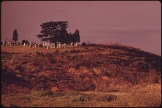 After Miles of Bare Land Is A Remainder of the Past, the Casville Cemetery, Off Route 22. Casville, Ohio, No Longer Exists. 10/1973
