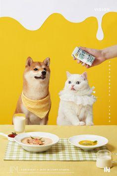 猫 projects | Behance 上的照片、视频、徽标、插图和品牌 Pet Branding, Funny Animals, Cute Animals, Dog Shots, Dog Cafe, Cat Pose, Pet Fashion, Pet Search, Dog Snacks