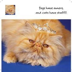 cat & tiara | Flickr - Photo Sharing!
