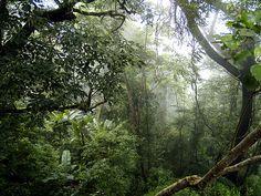 Deep Jungle by kasper.jeppesen, via Flickr