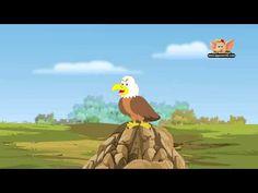 Animal Facts - Bald Eagle