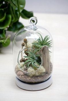 38 Cute Creative Air Plant Terrarium Kit and Stained Glass Ideas
